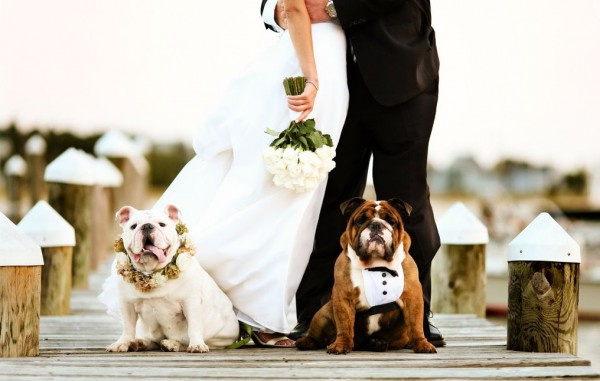 Easy Ways to Include Your Pets in Your Wedding